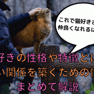 猫好きの性格や特徴とは?仲いい関係を築くための情報をまとめて解説