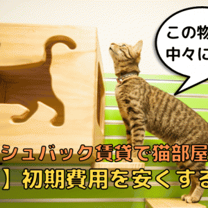 キャッシュバック賃貸で猫部屋探し!手堅く【1万円】初期費用を節約する方法