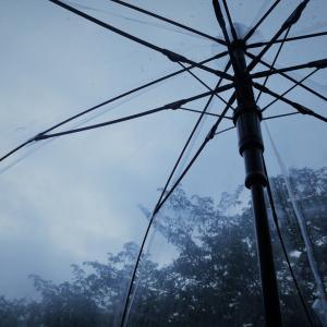やっと梅雨が明けそう