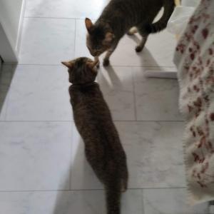 迷子猫保護しました! コテルイそわそわ