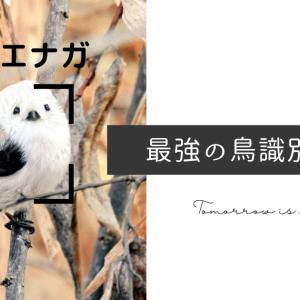 【Picture Bird】鳥の識別に迷ったら使って欲しい、超高精度識別アプリ