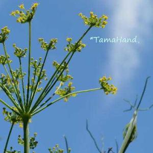 【自然観察】黄色い花。