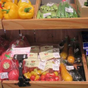 自然農の野菜出荷情報 玉ねぎの育苗と検証2021年9月2日