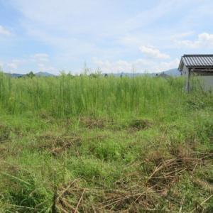 住宅街の耕作放棄地で自分流自然農➂少し草刈 2021年8月26日