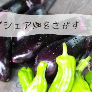 千葉県でシェア畑を探すには!?ほかの貸し農園との違いは?