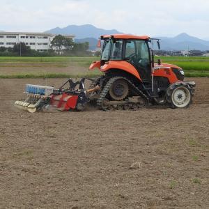 小豆の播種作業