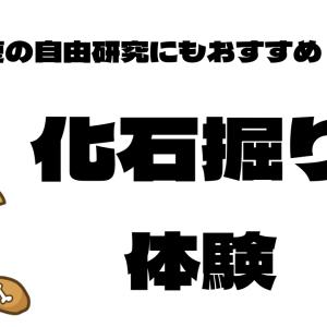 化石掘り体験できる博物館3選【夏休みの自由研究にも】