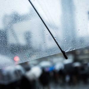 雨の日曜日☔