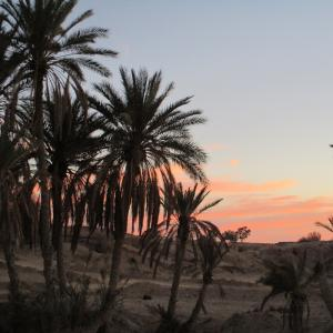 【トズール】チュニジアのリアル砂漠のオアシスの街を歩いてみる