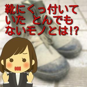 靴を履きたくても履けない!?靴にくっついていた、とんでもないものとは?