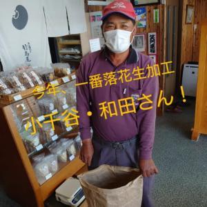 落花生煎り加工、今年一番!小千谷・和田さん。大豆一番魚沼市・遠藤様