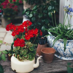 家庭菜園は健康に良い? 2021.9.23