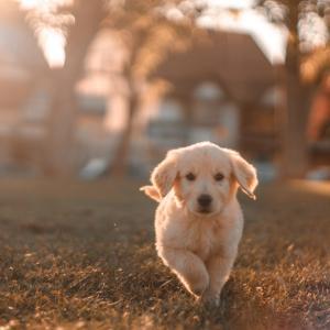 愛犬といつまでも健康に暮らす