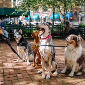 犬種ランキングベスト10