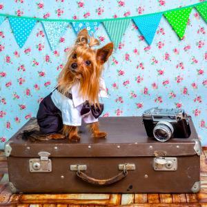 【愛犬と共に旅行に行こう】ペットと泊まれる宿泊施設