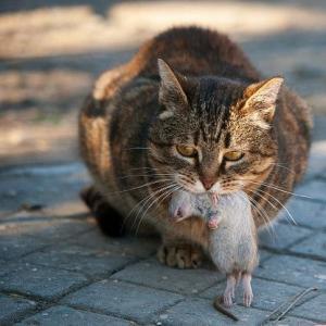 野良猫は駆除しよう!  外ネコ駆除は必須