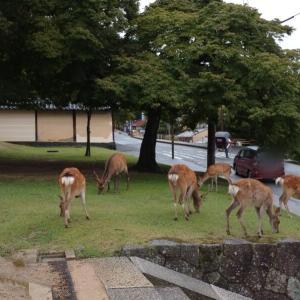 【8月15日】奈良公園の人混み