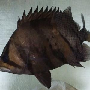 となりの魚