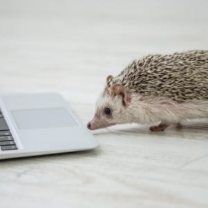 [ConoHa] SSLサーバ証明書更新のご案内メールが届いたら
