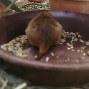 ビオトープで見つけた生き物に大興奮