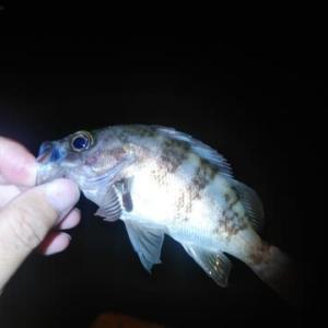 姫戸港の夜釣り