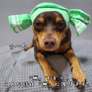 お空からモデルさん登場  (シェリ)