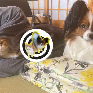 犬の寝る位置と飼い主との関係【どこに寝るかで犬の気持ちがわかる⁉】