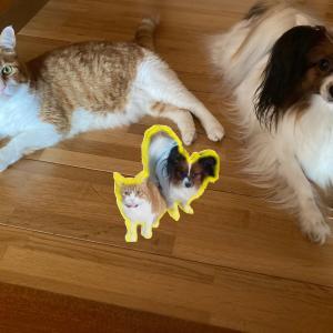 こんなにも違う!猫の「おかえり」と犬の「おかえり」【ツンデレとデレデレ】