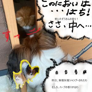 ろくの もふもふ日和【ほっこり4コマ】【とある散歩帰り】