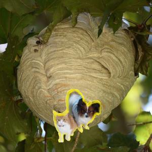 ホースと物干しざおでアシナガバチの巣を退治してみたⅡ【最悪の結末に⁉】