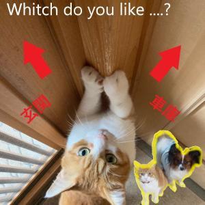 遊んでほしい猫がとる行動が賢すぎると話題に!【にゃんともすごい!】