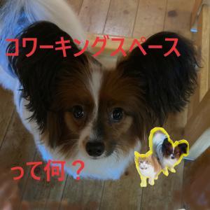 石川県で自習ができる場所④シナージスペース