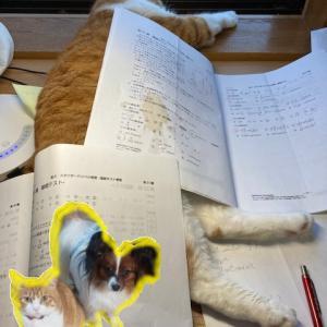 9月8日のお勉強【泣く子は餅を1つ多くもらえる?】