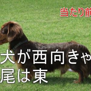 犬が西向きゃ尾は東(いぬがにしむきゃおはひがし)の意味と使い方とは?例文もご紹介!