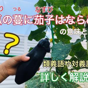 瓜の蔓に茄子はならぬ(うりのつるになすびはならぬ)とは?詳しく解説!