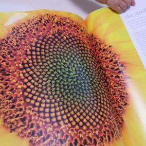 圧倒的なビジュアルで大人も子どもも楽しめる 『FLORA 図鑑 植物の世界』