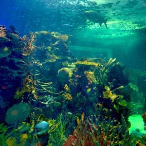 【観光おすすめ】メキシコシティのインブルサ水族館が超楽しい!