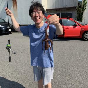 徳島県の堤防からマダコさんが釣れました。2021年7月11日