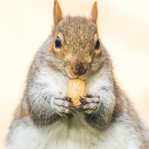 ネパール語で一言「太りましたか?」