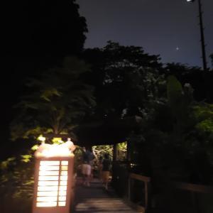 ナイトサファリとRainforest luminaへ