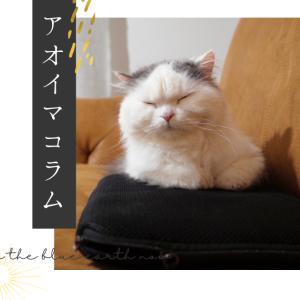 保護猫と暮らすということ
