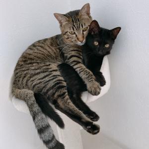 個性とセンスの光る寝姿の猫たち