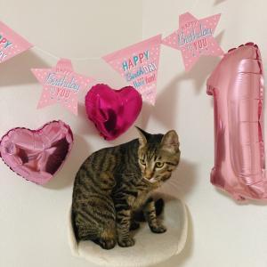 今日は猫ちゃんのお誕生日です