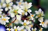 今日の誕生花