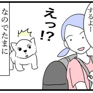 はしゃぎすぎたシニア犬