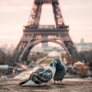 「エミリー、パリへ行く」セリフから学ぶ英語表現5つ