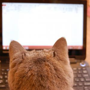JINでパンくずリストを記事上に綺麗に配置する方法【WordPress, Breadcrumb NavXT】