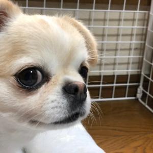 犬の無駄吠えのやめさせ方、教えてください。