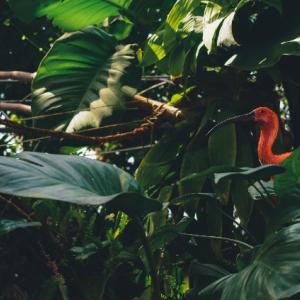 海外移住 移住先はマレーシアのジャングル!?