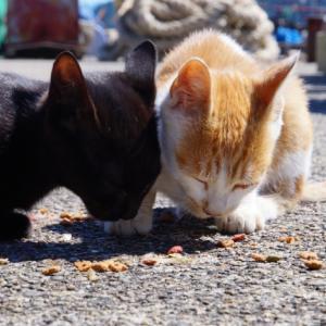 野良猫の餌場に置いてあったメモを見て、命について考える